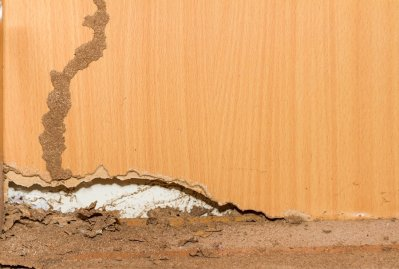 Found Termites In Your Home Mightymite Termite