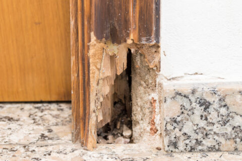 Doorframe damaged by termites
