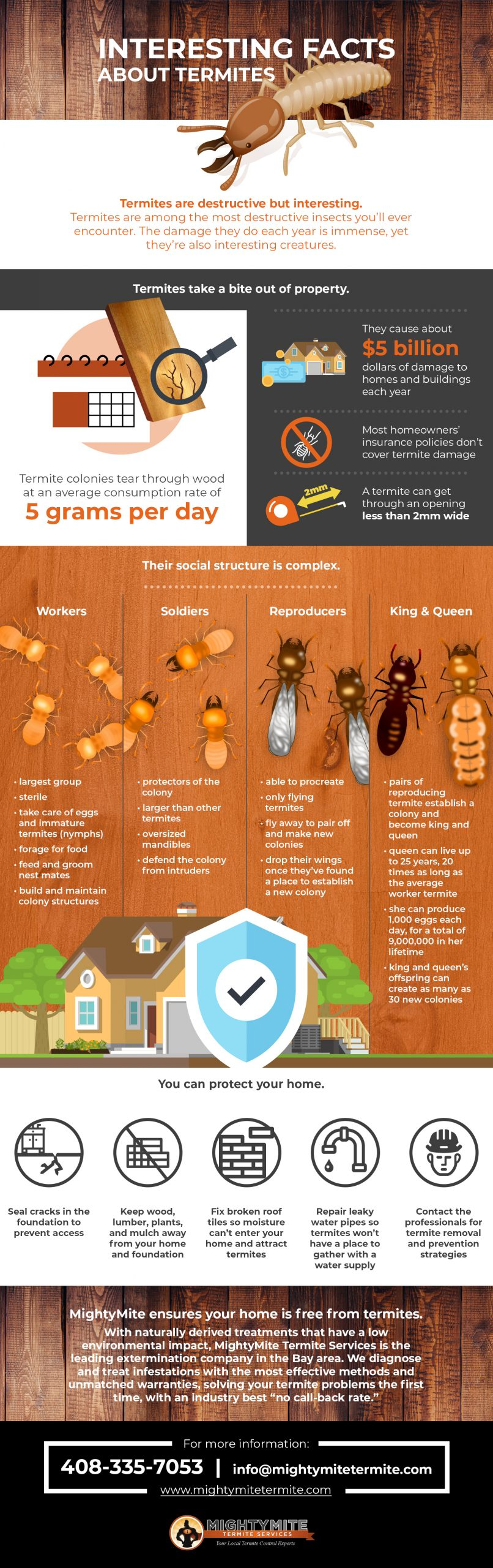 MightyMite Termite facts infographic